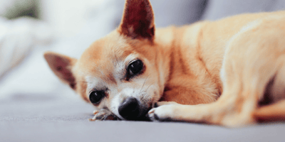 What to do when your dog is vomiting and has diarrhoea