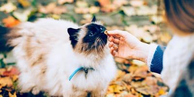 Kot je z ręki