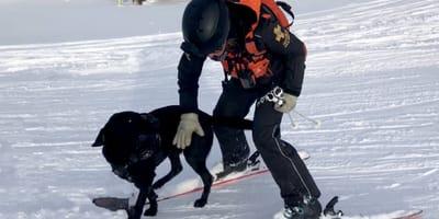 Eko wraz ze swoją panią ratuje ludzi przysypanych śniegiem!
