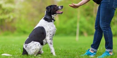 Hund beim Wesenstest