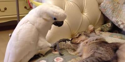 gattino e pappagallo