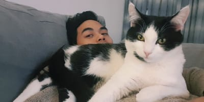 Black and white tuxedo cat lies on top of man