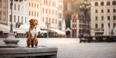 Hund sitzt in der Stadt