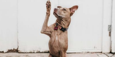 ¿Sirve de verdad el contador manual para el perro?