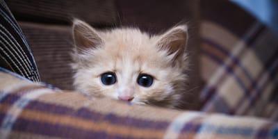 gattino in una coperta