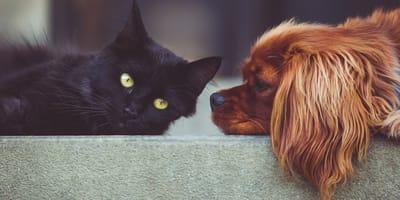Hund und Katze vertragen sich