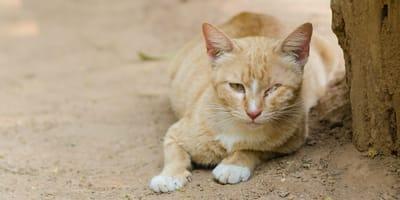 Encuentra un gatito con dos perdigones en la cabeza y escribe una carta que más tarde dará ejemplo a todo el mundo