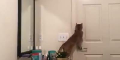 Gatto intento ad aprire porta