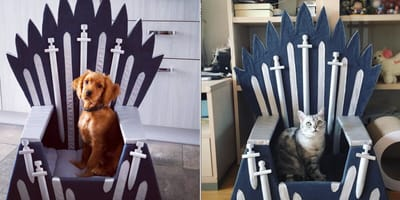 Game of Thrones pet bed