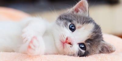 oczy małego kotka