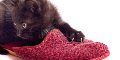 Jak zneutralizować zapach kociego moczu i pozbyć się plam?