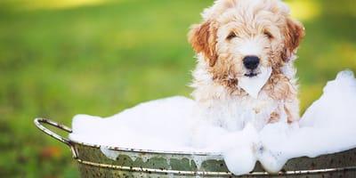 ¿Cómo debo secar a mi perro después del baño?