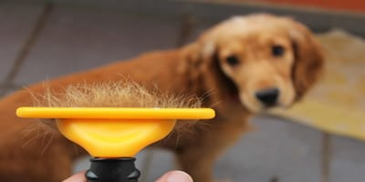 Cepillo para perros de pelo corto