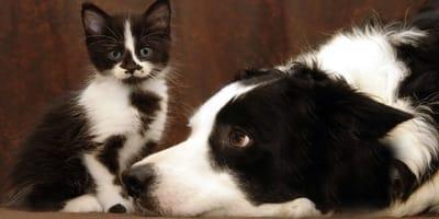 perro gato herencia