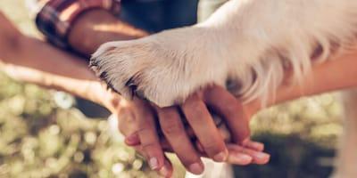 Seguro médico para perros