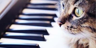Gatto accanto al pianoforte
