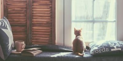 Katze von hinten schaut aus Wohnung zum Fenster raus