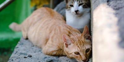 gatti su uno scalino