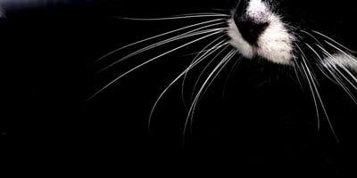 Weiße Schnurrhaare auf schwarzem Hintergrund