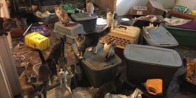 Vernachlässigte Katzen in Wohnung