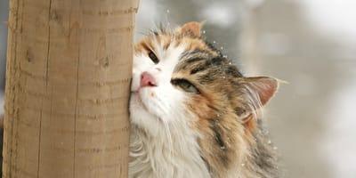 Dlaczego koty lubią  się ocierać?