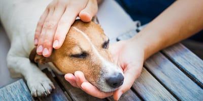 Alles Wissenswerte zu Autoimmunerkrankungen beim Hund
