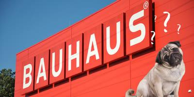 Hund vor Bauhaus