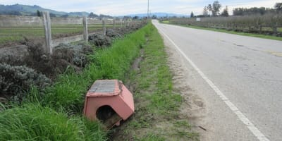 Drivers find doghouse on the side of the road, and it's not empty