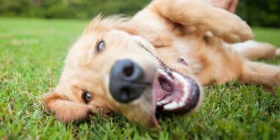 zęby psa