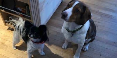 Nach 16 Notrufen: Polizei dringt in Haus von Hundehaltern ein