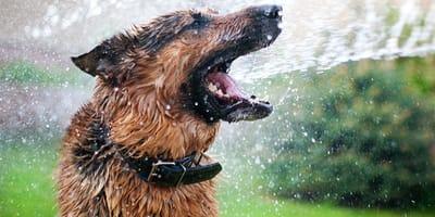 Cómo actuar si mi perro le tiene miedo al agua