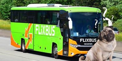 Hund vor Flixbus