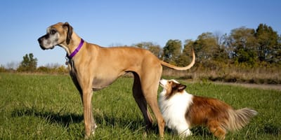 pies obwąchuje psa