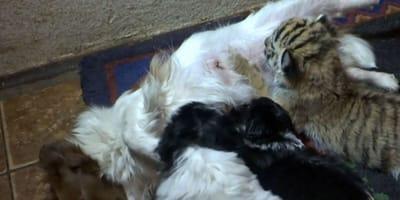 Hundemama: Doch ein Baby passt nicht zu den anderen Welpen
