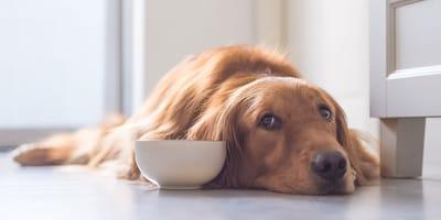 Lo que debes hacer si tu perro no bebe agua