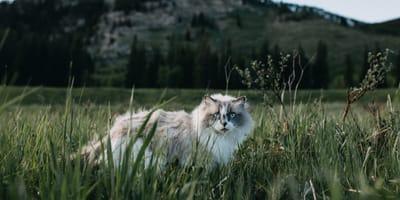kot w trawie