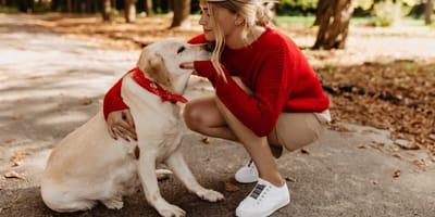 Zostałeś poproszony o tymczasową opiekę nad psem? Przeczytaj