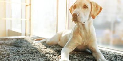 Arenero para perros
