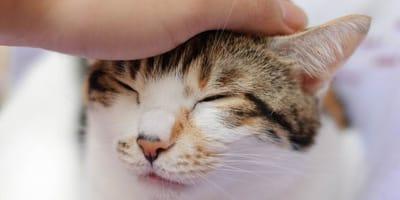 ¿Qué cuidados necesita un gato sordo?
