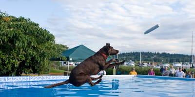 Skoki psów do basenu – poznaj dock diving!