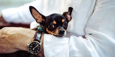 Pies i zegarek