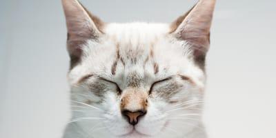 pyszczek kota