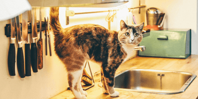 Cats in Wrexham are to receive a £2.1m hotel for strays