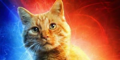 Captain Marvel Goose: Favourite felines in film