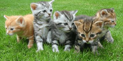 Quanto deve mangiare un gattino di un mese?