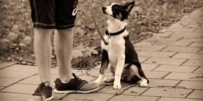 cane-cucciolo-seduto-ai-piedi-del-padrone