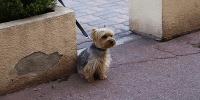 cane-piccolo-al-guinzaglio-in-attesa-del-padrone