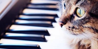 Cómo acostumbrar a tu gato a los ruidos que le molestan