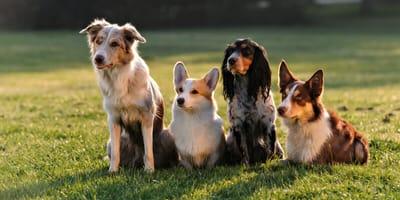 Perfekte Begleiter: Die schönsten mittelgroßen Hunderassen