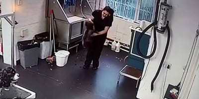 Toelettatrice ripresa mentre maltratta un cane (Video)